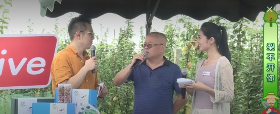 """《乡村寻味记》""""庄行蜜梨行""""助力乡村产业振兴掀网友抢购狂潮!"""